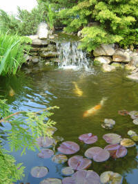 pond water feature with fish
